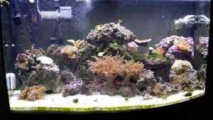 Saltwater fish and coral rescue.