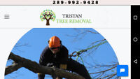 Professional small and medium tree removal  289 992 9428