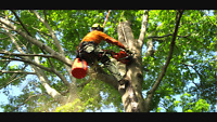 Tree Removal Service Fredericton, Oromocto and surrounding area.