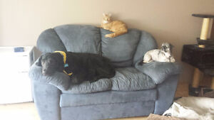 Place to rent that is pet friendly Stony Plain/Spruce Grove Area
