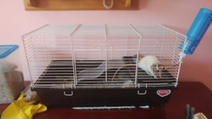 Rat/hamster cage and accessories