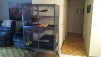 Cage Marshall pour furet ou petit animaux