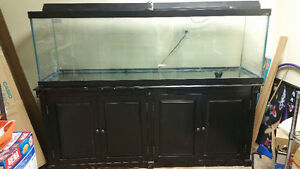 130 gallons fish tank with all necessary accessories