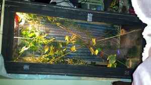 Baby chameleon and enclosure