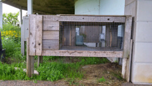 Large Rabbit cages/hutches, $100 each.