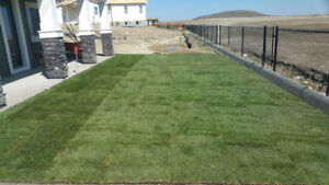 Sod sale-- Get your sod installed ASAP! Free Estimate