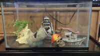 6 Tanks (2 for reptiles) and accessories need gone asap!!