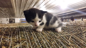 FREE kitten looking for a comfortable home