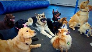 Doggie daycare and boarding NOW OPEN!