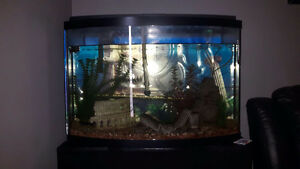 36 Gallon Bow Front tank w/ Stand