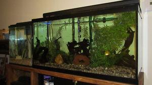 kit de 4 aquariums vendu seulement ensemble Saguenay Saguenay-Lac-Saint-Jean image 1