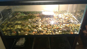 Mississippi map turtle tank and accessories