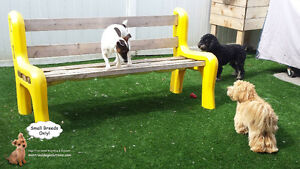 *FULL FOR HOLIDAYS* Dog Daycare & sleepovers for small dogs West Island Greater Montréal image 3