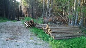 Cedar - rails, posts and saw logs for sale Kingston Kingston Area image 2