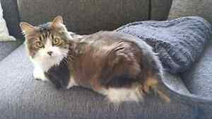 Two 10 year-old cats to give to a new loving home