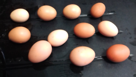 6 Fresh eggs from our chickens