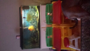 fish tank with red devil fish ..need gone asap