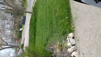 Grass cutting, Weeding. & Trimming from S25 Free Estimates
