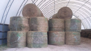 Hay for sale $40 Bale