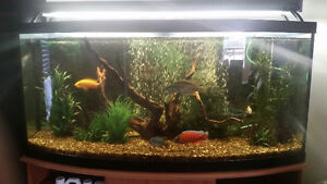 70 Gallon Bow Front Aquarium & All Accessories