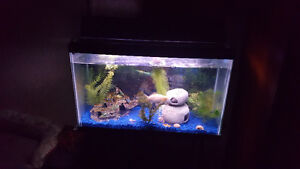 Blue Rocks/fish tank substrate