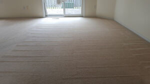 CARPET CLEANING WHOLE HOUSE 119.95 (UPTO 5 ROOMS) London Ontario image 2