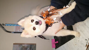 Dog grooming for your furry friend Peterborough Peterborough Area image 9