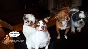 NO CAGE small dog sitting/pension by a certified trainer West Island Greater Montréal image 2