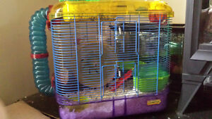 Hamster with nice cage and accessories
