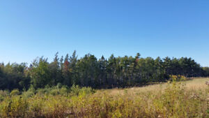 Wooded Land in Tarantum for sale