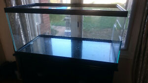 Turtle tank with filter included