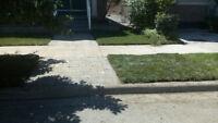 $1 per SQFT Kentucky  blue grass installation! book now!