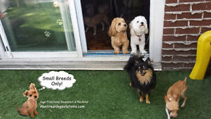 Cage-free home for small dogs day or night stays short/long term
