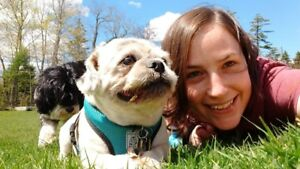 Experienced pet sitter - let outs and drop-ins