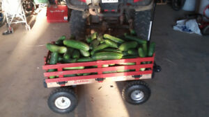 4 for $1. Fresh cucumbers for eating or large ones for pickling