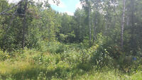 Build Your Dream House on This Private 4.63 Acre Lot!