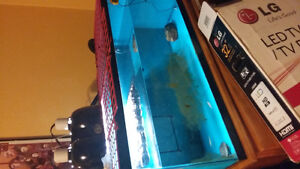 Red Ear Slider Turtle, Tank Set. We Are Selling This Habitat.
