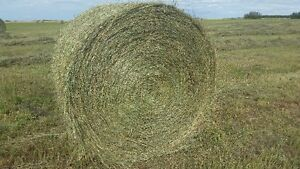 Round Hay Bales - Excellent For Horses, Sheep, Goats, Cattle