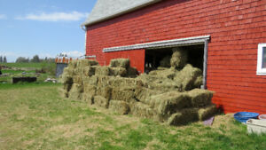 Square Bales of Hay for Sale