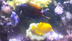Salt water fish, live rock & corals ( contents of tank only)