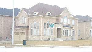 Brand New House For Rent - Cookstown - Innisfil - Bradford