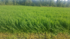 Deer feed - Soft 2nd cut alfalfa