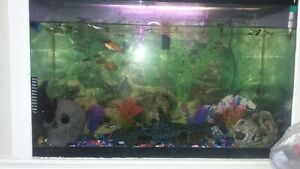 tank and fish for sale