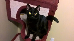 Friendly black cat for rehome!!