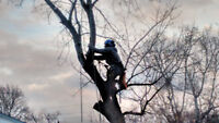 Small Tree Removal Service. 647-888-5497