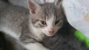 Cute kitten looking for a good home