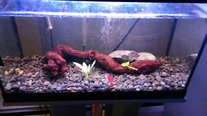 20 gallon fish tank stand included