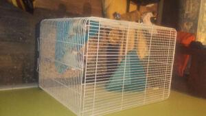 2 rats, petits frères