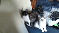 Three kittens to give away to good homes