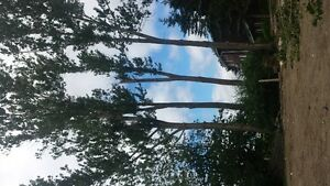 //////  VC TREE SERVICE.insured. PROFESSIONAL SERVICE. LOW PRICE
